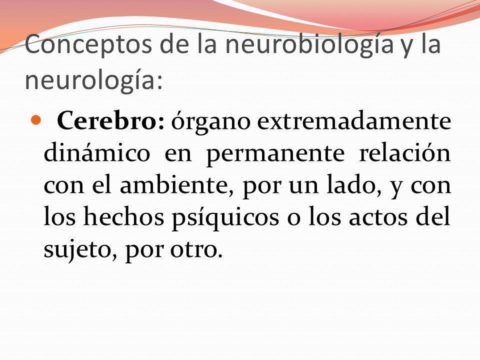 Conceptos de la neurobiología y la neurología: Cerebro: órgano extremadamente dinámico en permanente relación con el ambiente, por un lado, y con los