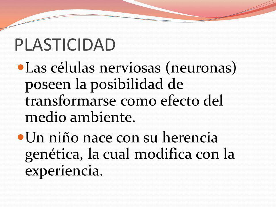 PLASTICIDAD Las células nerviosas (neuronas) poseen la posibilidad de transformarse como efecto del medio ambiente. Un niño nace con su herencia genét