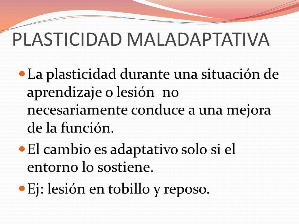 PLASTICIDAD MALADAPTATIVA La plasticidad durante una situación de aprendizaje o lesión no necesariamente conduce a una mejora de la función. El cambio