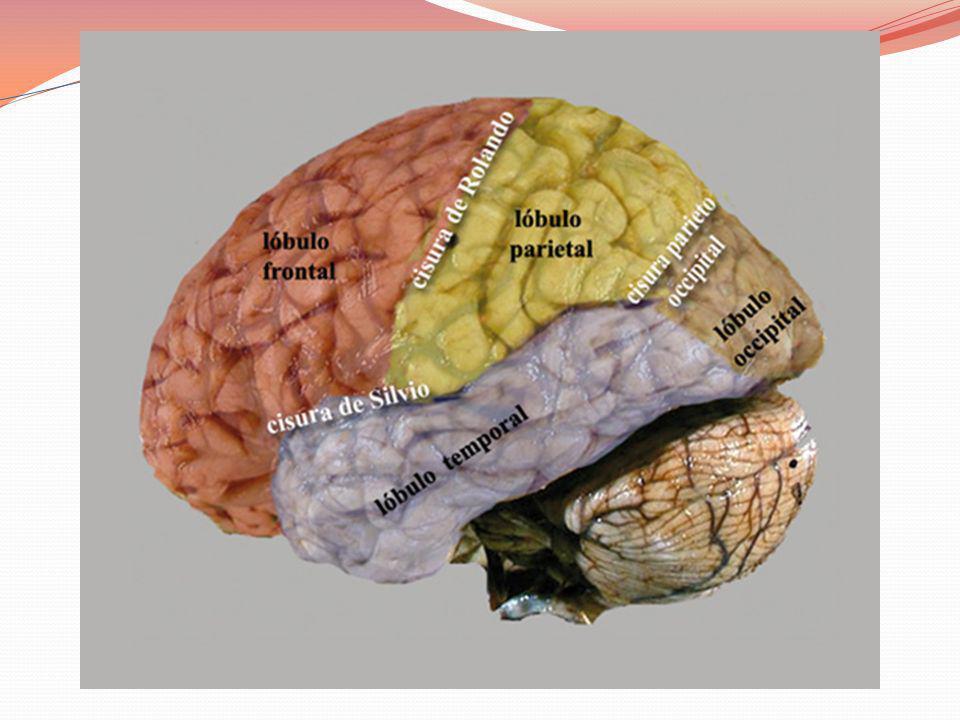 La experiencia deja una huella en el cerebro y mucho más cuando se trata de la primera infancia.