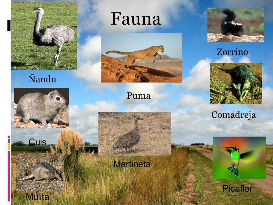 Fauna Zorrino Ñandu Puma Comadreja Cuis Mulita Picaflor Martineta