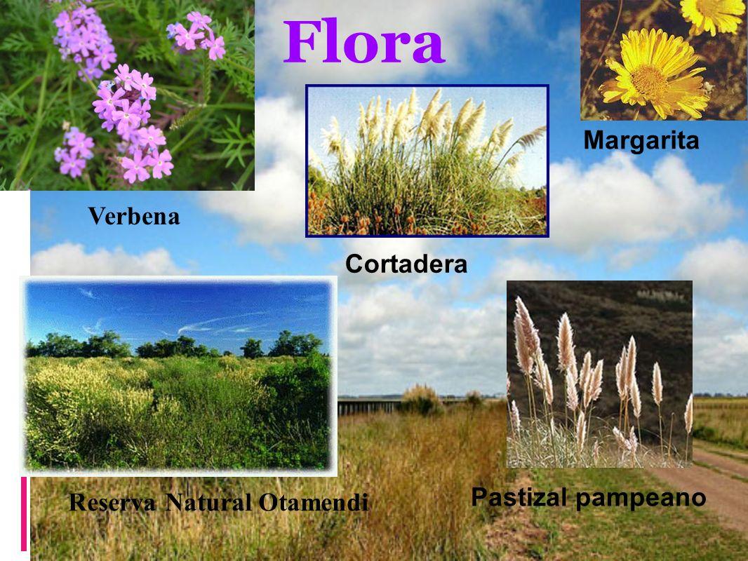 Flora Margarita Cortadera Pastizal pampeano Verbena Reserva Natural Otamendi
