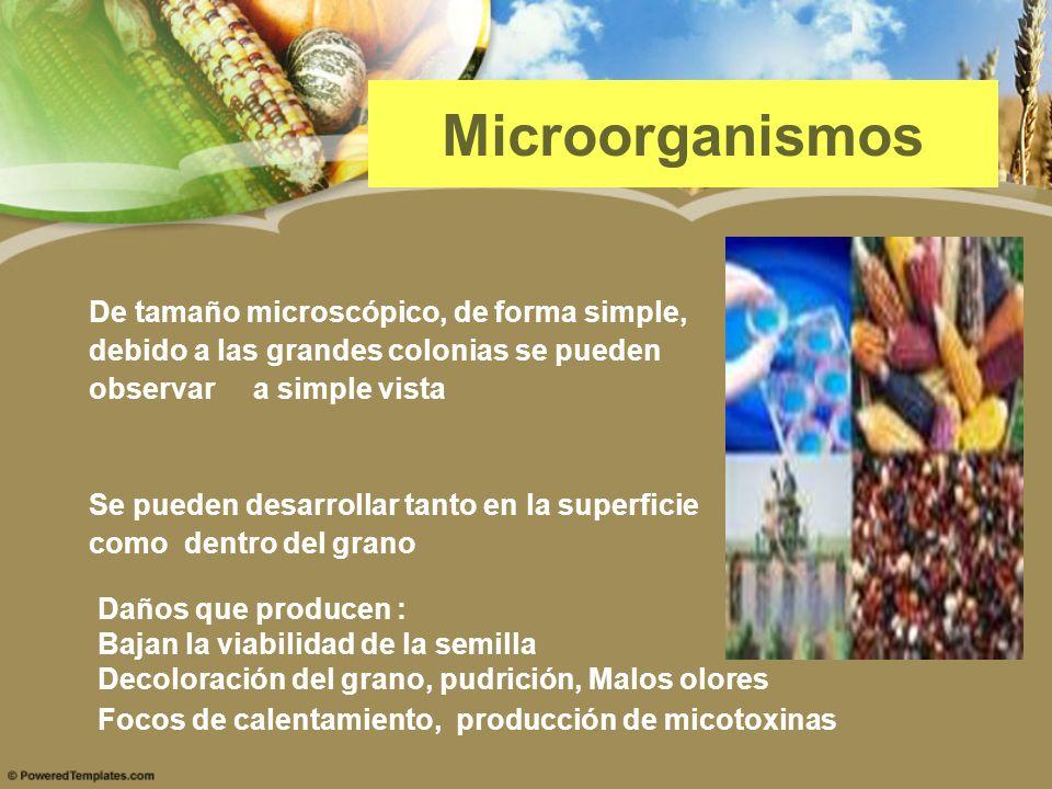Microorganismos De tamaño microscópico, de forma simple, debido a las grandes colonias se pueden observar a simple vista Se pueden desarrollar tanto e