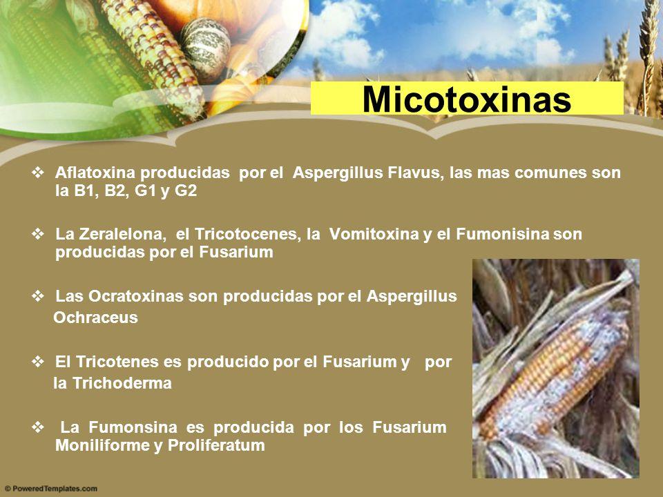 Micotoxinas Aflatoxina producidas por el Aspergillus Flavus, las mas comunes son la B1, B2, G1 y G2 La Zeralelona, el Tricotocenes, la Vomitoxina y el