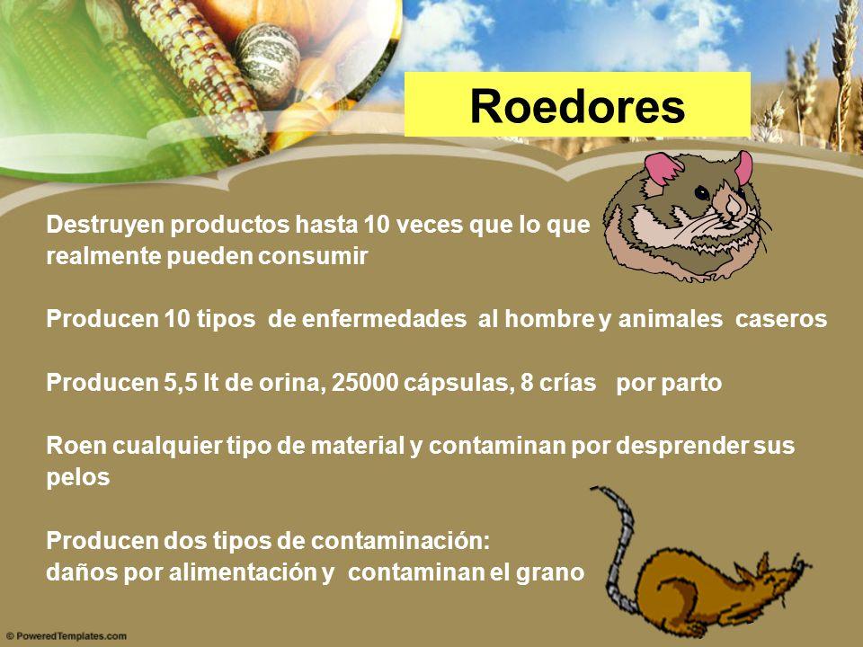 Roedores Destruyen productos hasta 10 veces que lo que realmente pueden consumir Producen 10 tipos de enfermedades al hombre y animales caseros Produc