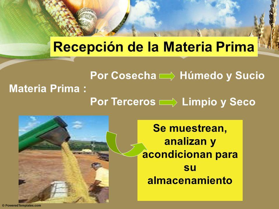 Recepción de la Materia Prima Por Cosecha Materia Prima : Por Terceros Húmedo y Sucio Limpio y Seco Se muestrean, analizan y acondicionan para su alma