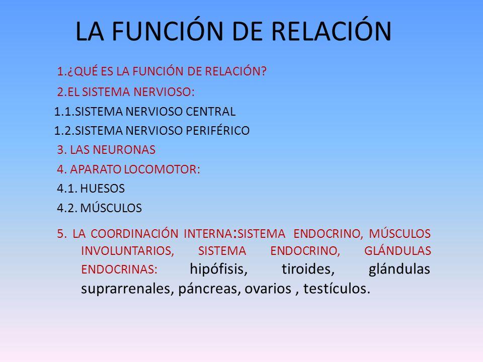 LA FUNCIÓN DE RELACIÓN 1.¿QUÉ ES LA FUNCIÓN DE RELACIÓN? 2.EL SISTEMA NERVIOSO: 1.1.SISTEMA NERVIOSO CENTRAL 1.2.SISTEMA NERVIOSO PERIFÉRICO 3. LAS NE