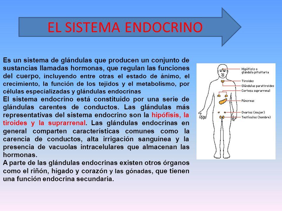 Es un sistema de glándulas que producen un conjunto de sustancias llamadas hormonas, que regulan las funciones del cuerpo, incluyendo entre otras el e
