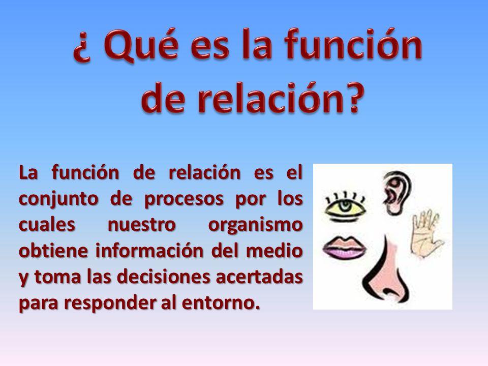 La función de relación es el conjunto de procesos por los cuales nuestro organismo obtiene información del medio y toma las decisiones acertadas para