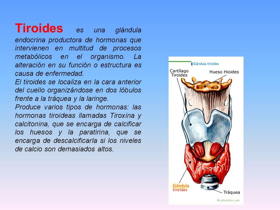 Tiroides es una glándula endocrina productora de hormonas que intervienen en multitud de procesos metabólicos en el organismo. La alteración en su fun