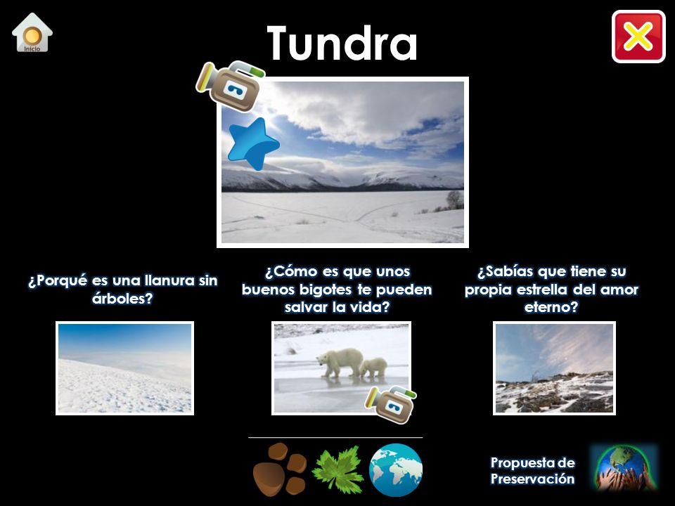 Cadena alimenticia - Lobo Tundra