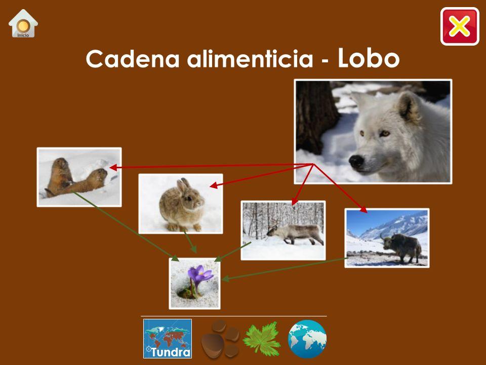 ¿Sabías que…? …es una de las especies con mayor distribución en diferentes ecosistemas. …por la similitud de actitudes, los perros se consideran como