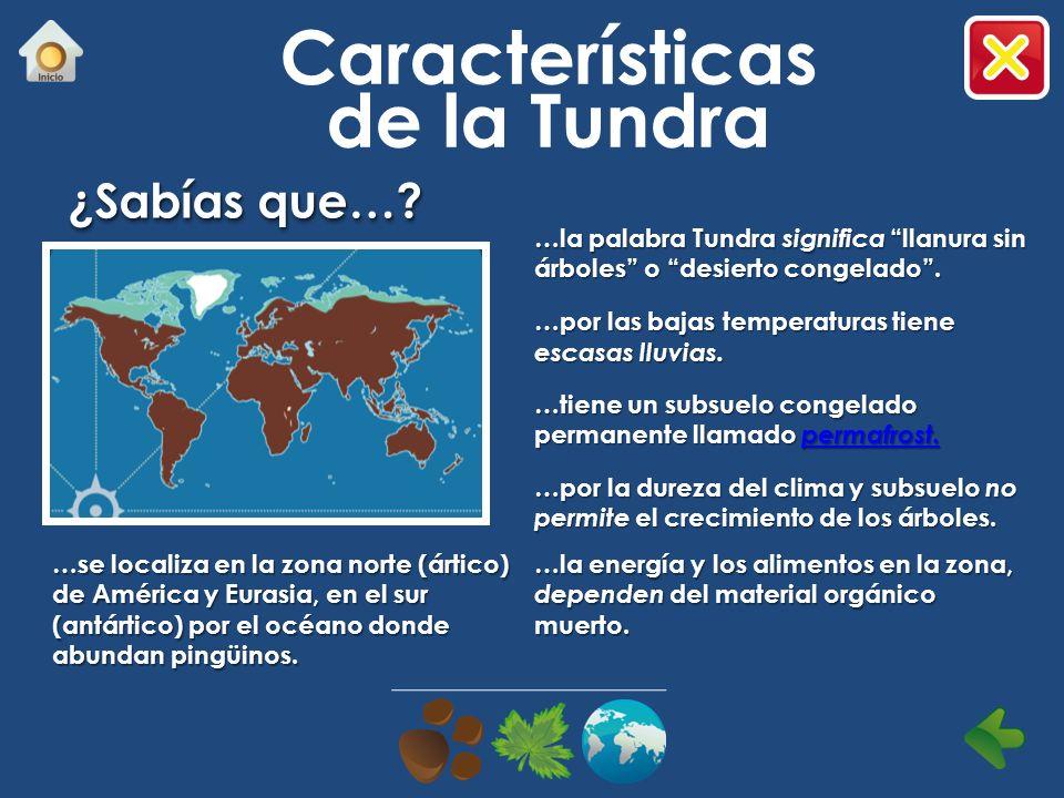 Desierto ¿Cómo dar a conocer los esfuerzos de supervivencia y de organización de las plantas y animales que forman parte de este ecosistema?