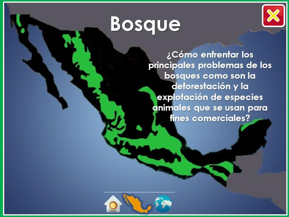 México, mosaico de Ecosistemas Semi-desértico Selva Pradera Bosque Desierto Manglar