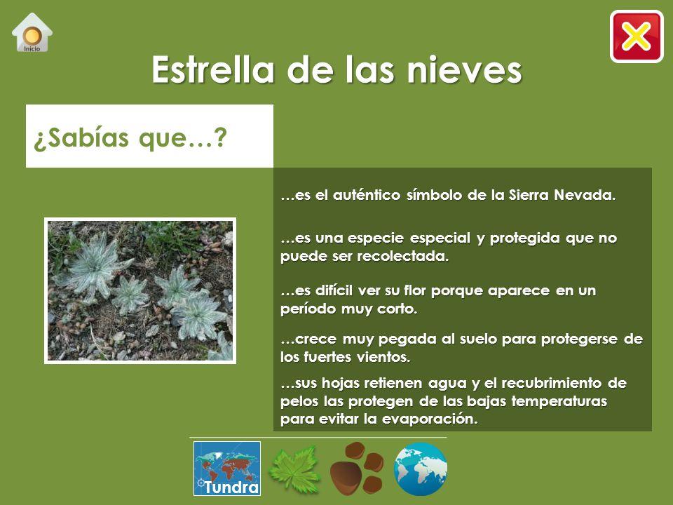 Semi-desértico Selva Pradera Bosque Desierto Manglar Tundra