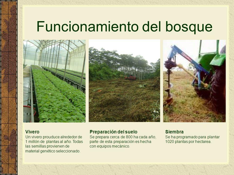 Funcionamiento del bosque From seed to tree Vivero Un vivero prouduce alrededor de 1 millón de plantas al año. Todas las semillas provienen de materia