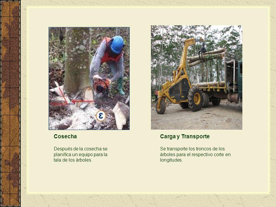 Cosecha Después de la cosecha se planifica un equipo para la tala de los árboles. Carga y Transporte Se transporte los troncos de los árboles para el