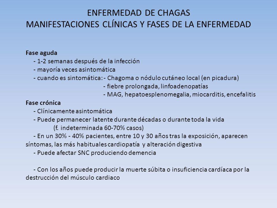 ENFERMEDAD DE CHAGAS MANIFESTACIONES CLÍNICAS Y FASES DE LA ENFERMEDAD Fase aguda - 1-2 semanas después de la infección - mayoría veces asintomática -
