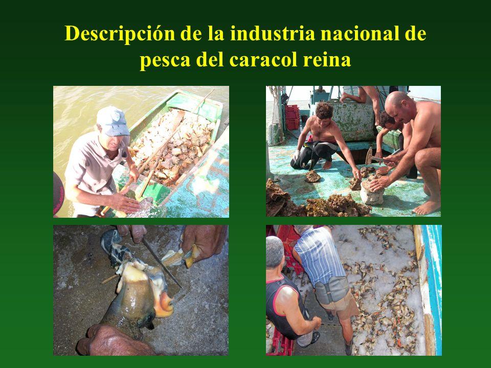 Descripción de la industria nacional de pesca del caracol reina