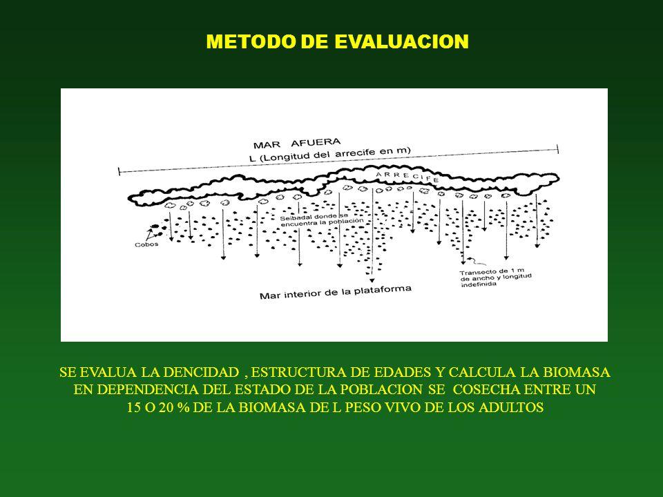 CONTEO DE INDIVIDUOS POR OBSERVACION VISUAL EN TRANSEPTOS DE LONGITUD VARIABLE Anchura del transepto: 1 m (buceo autónomo)
