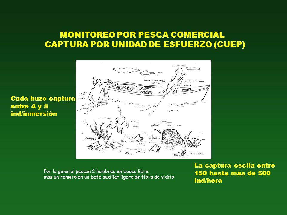 MONITOREO POR PESCA COMERCIAL CAPTURA POR UNIDAD DE ESFUERZO (CUEP) Por lo general pescan 2 hombres en buceo libre más un remero en un bote auxiliar l