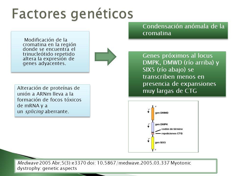 Modificación de la cromatina en la región donde se encuentra el trinucleótido repetido altera la expresión de genes adyacentes. Medwave 2005 Abr;5(3):