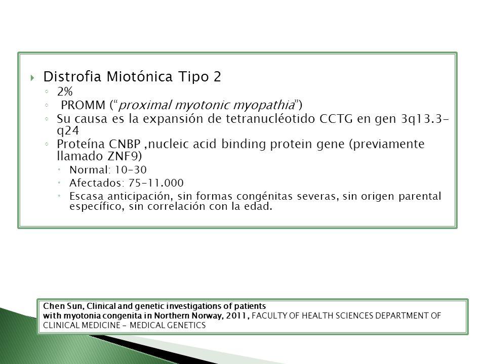 Distrofia Miotónica Tipo 2 2% PROMM (proximal myotonic myopathia) Su causa es la expansión de tetranucléotido CCTG en gen 3q13.3- q24 Proteína CNBP,nu