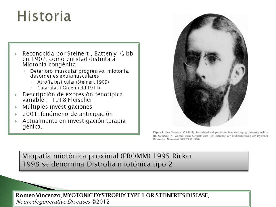 Reconocida por Steinert, Batten y Gibb en 1902, como entidad distinta a Miotonía congénita Deterioro muscular progresivo, miotonía, desórdenes extramu