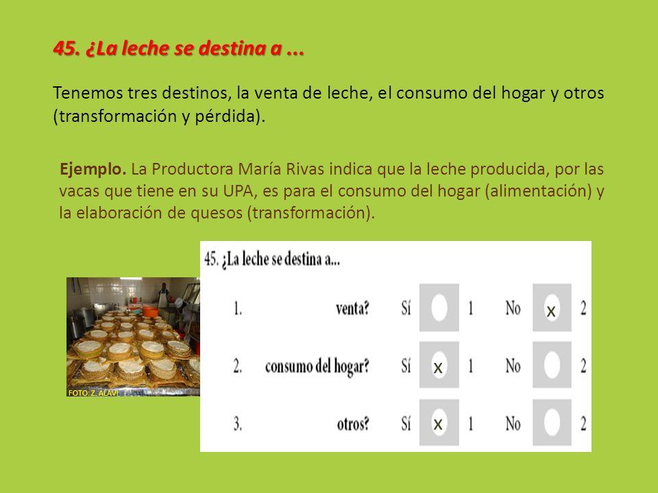 45. ¿La leche se destina a... Tenemos tres destinos, la venta de leche, el consumo del hogar y otros (transformación y pérdida). Ejemplo. La Productor