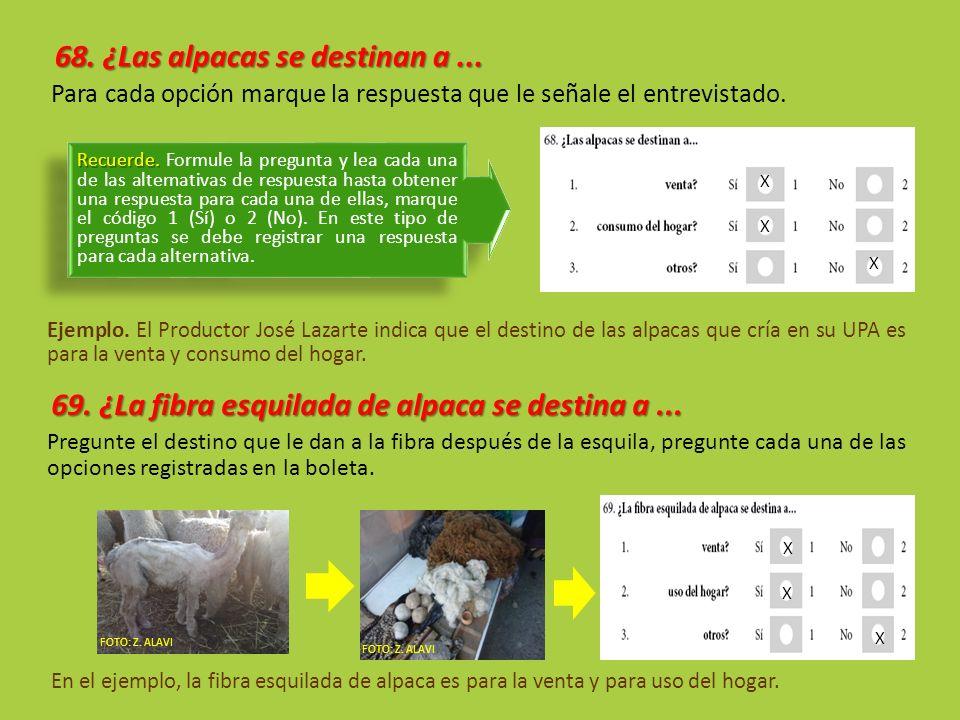 68. ¿Las alpacas se destinan a... Para cada opción marque la respuesta que le señale el entrevistado. Ejemplo. El Productor José Lazarte indica que el