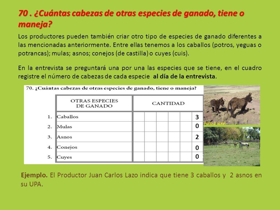 70. ¿Cuántas cabezas de otras especies de ganado, tiene o maneja? Los productores pueden también criar otro tipo de especies de ganado diferentes a la