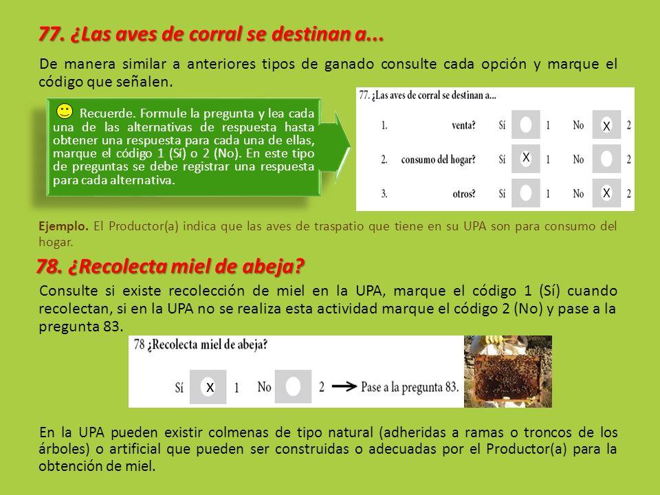 77. ¿Las aves de corral se destinan a... De manera similar a anteriores tipos de ganado consulte cada opción y marque el código que señalen. Ejemplo.