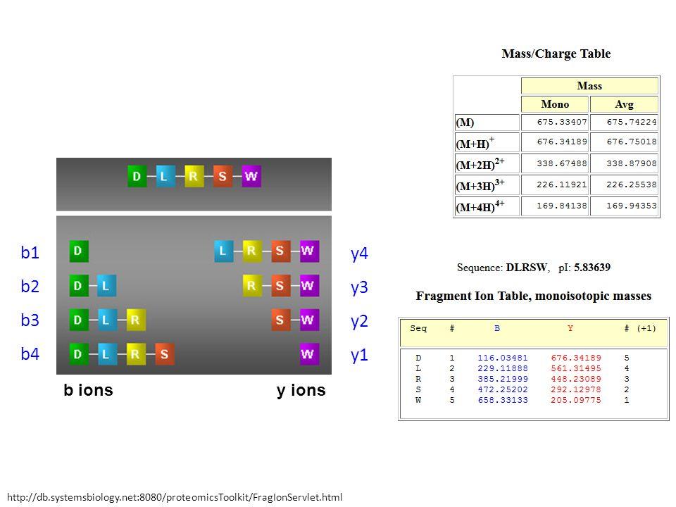 y ionsb ions b1 b2 b3 b4 y4 y3 y2 y1 http://db.systemsbiology.net:8080/proteomicsToolkit/FragIonServlet.html