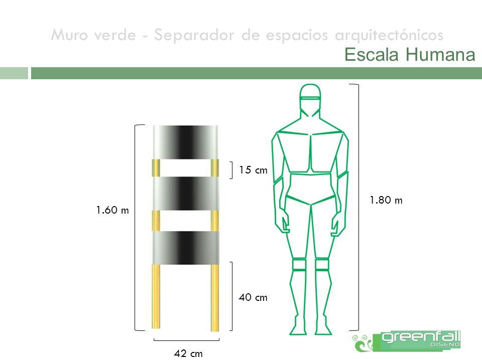 Muro verde - Separador de espacios arquitectónicos Escala Humana 1.60 m 15 cm 40 cm 42 cm 1.80 m