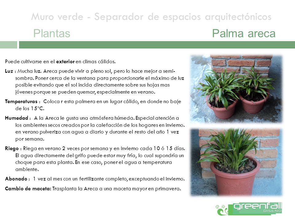Muro verde - Separador de espacios arquitectónicos PlantasPalma areca Puede cultivarse en el exterior en climas cálidos. Luz : Mucha luz. Areca puede