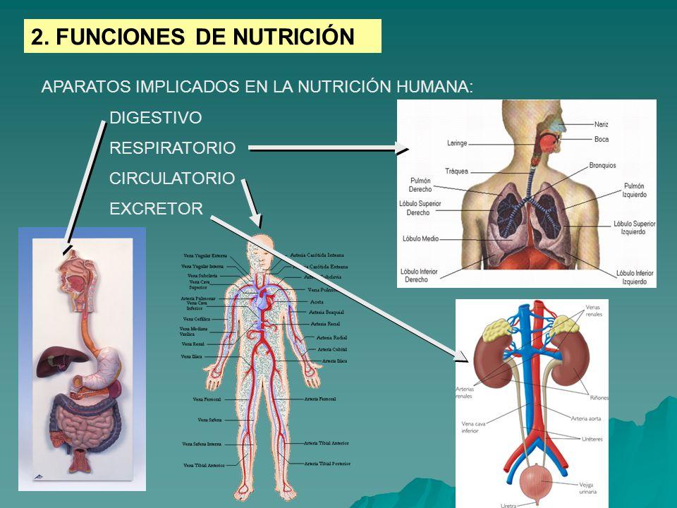 2. FUNCIONES DE NUTRICIÓN APARATOS IMPLICADOS EN LA NUTRICIÓN HUMANA: DIGESTIVO RESPIRATORIO CIRCULATORIO EXCRETOR