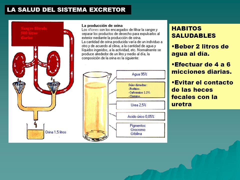 LA SALUD DEL SISTEMA EXCRETOR HABITOS SALUDABLES Beber 2 litros de agua al día. Efectuar de 4 a 6 micciones diarias. Evitar el contacto de las heces f