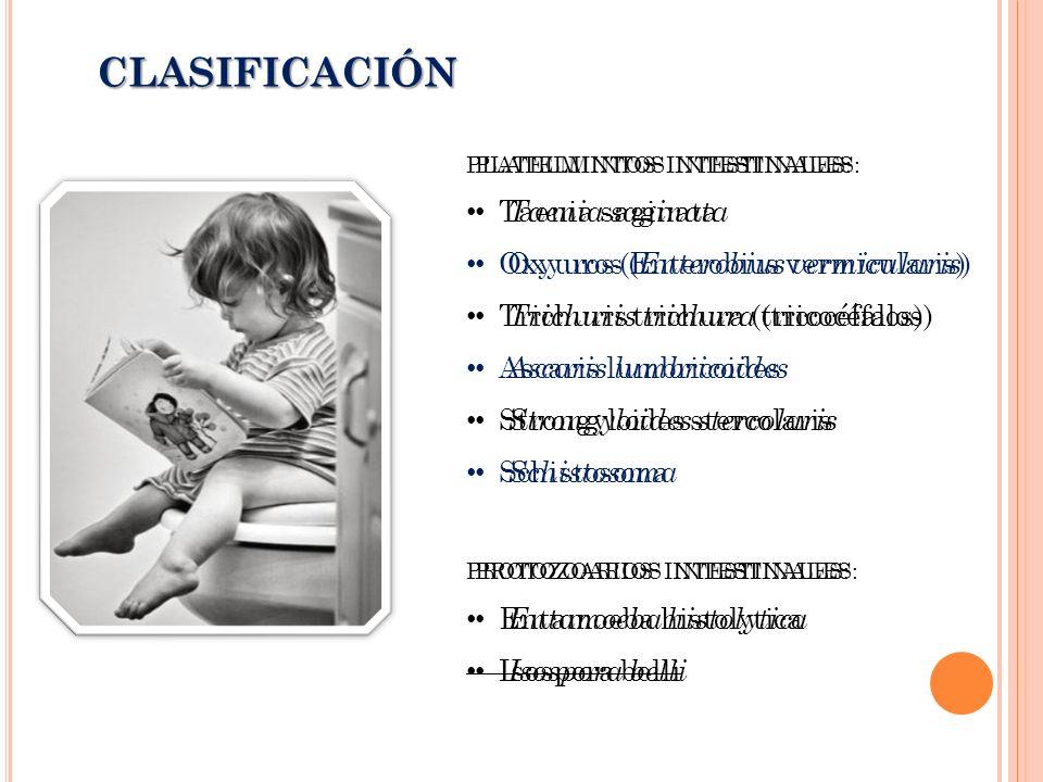 PLATELMINTOS INTESTINALES: Taenia saginata Oxyuros (Enterobius vermicularis) Trichuris trichura (tricocéfalos) Ascaris lumbricoides Strongyloides stercolaris Schistosoma PROTOZOARIOS INTESTINALES: Entamoeba histolytica Isospora belli CLASIFICACIÓN PLATELMINTOS INTESTINALES: Taenia saginata Oxyuros ( Enterobius vermicularis ) Trichuris trichura (tricocéfalos) Ascaris lumbricoides Strongyloides stercolaris Schistosoma PROTOZOARIOS INTESTINALES: Entamoeba histolytica Isospora belli