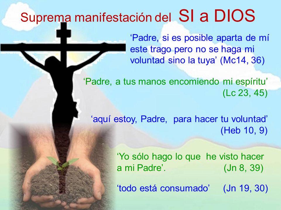 Suprema manifestación del SI a DIOS Padre, si es posible aparta de mí este trago pero no se haga mi voluntad sino la tuya (Mc14, 36) Padre, a tus mano