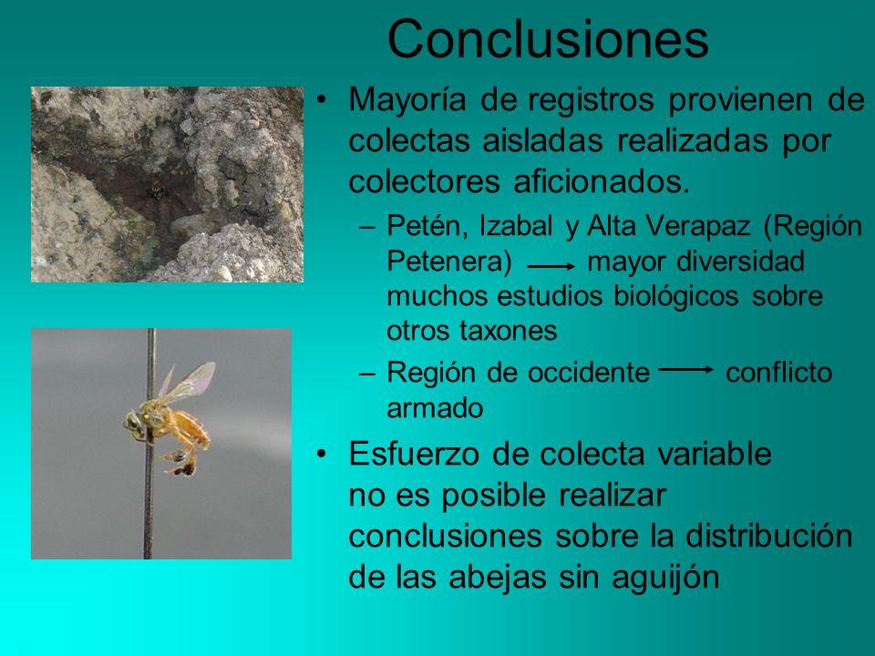 Conclusiones Mayoría de registros provienen de colectas aisladas realizadas por colectores aficionados. –Petén, Izabal y Alta Verapaz (Región Petenera
