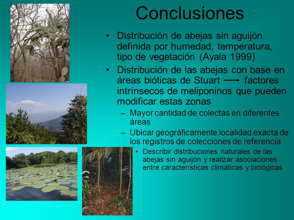 Conclusiones Distribución de abejas sin aguijón definida por humedad, temperatura, tipo de vegetación (Ayala 1999) Distribución de las abejas con base
