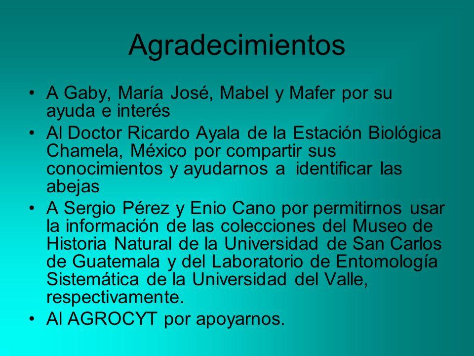 Agradecimientos A Gaby, María José, Mabel y Mafer por su ayuda e interés Al Doctor Ricardo Ayala de la Estación Biológica Chamela, México por comparti