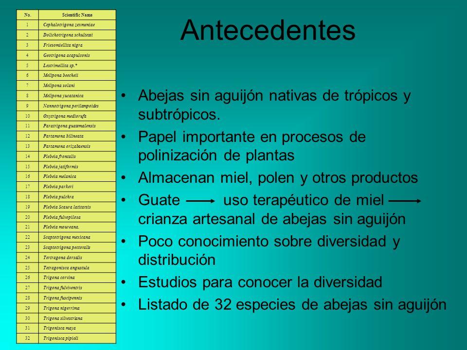 Antecedentes Abejas sin aguijón nativas de trópicos y subtrópicos. Papel importante en procesos de polinización de plantas Almacenan miel, polen y otr