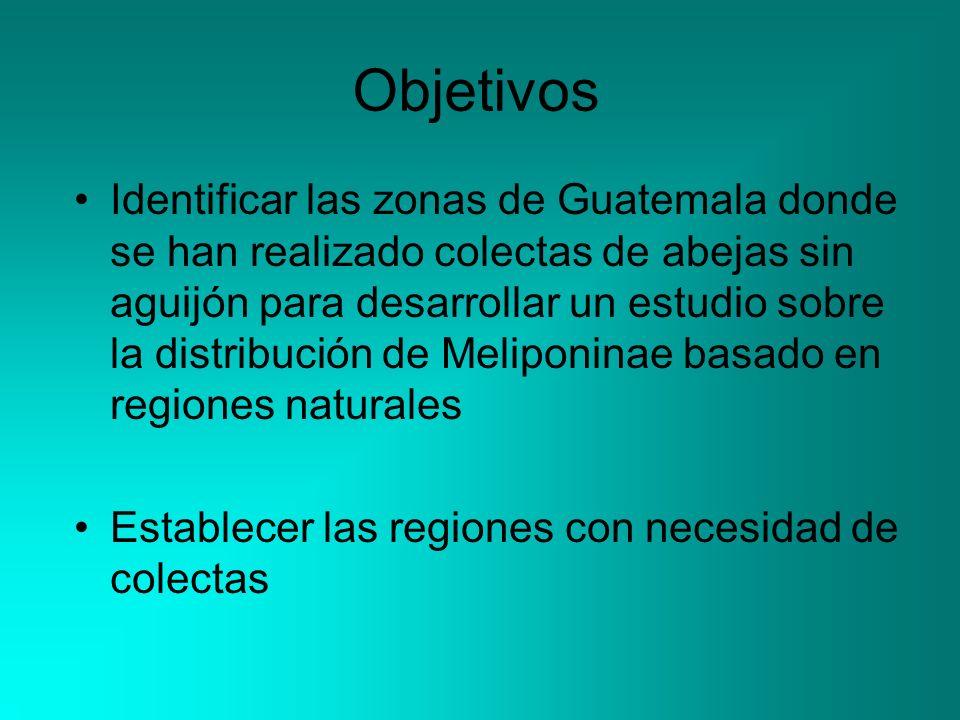 Objetivos Identificar las zonas de Guatemala donde se han realizado colectas de abejas sin aguijón para desarrollar un estudio sobre la distribución de Meliponinae basado en regiones naturales Establecer las regiones con necesidad de colectas