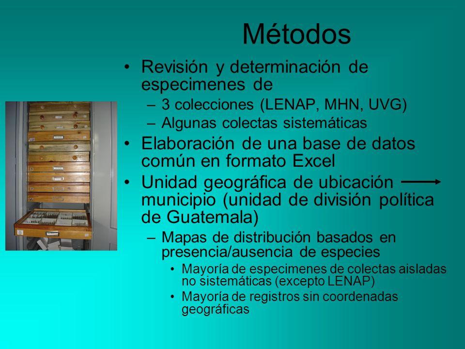 Métodos Revisión y determinación de especimenes de –3 colecciones (LENAP, MHN, UVG) –Algunas colectas sistemáticas Elaboración de una base de datos co