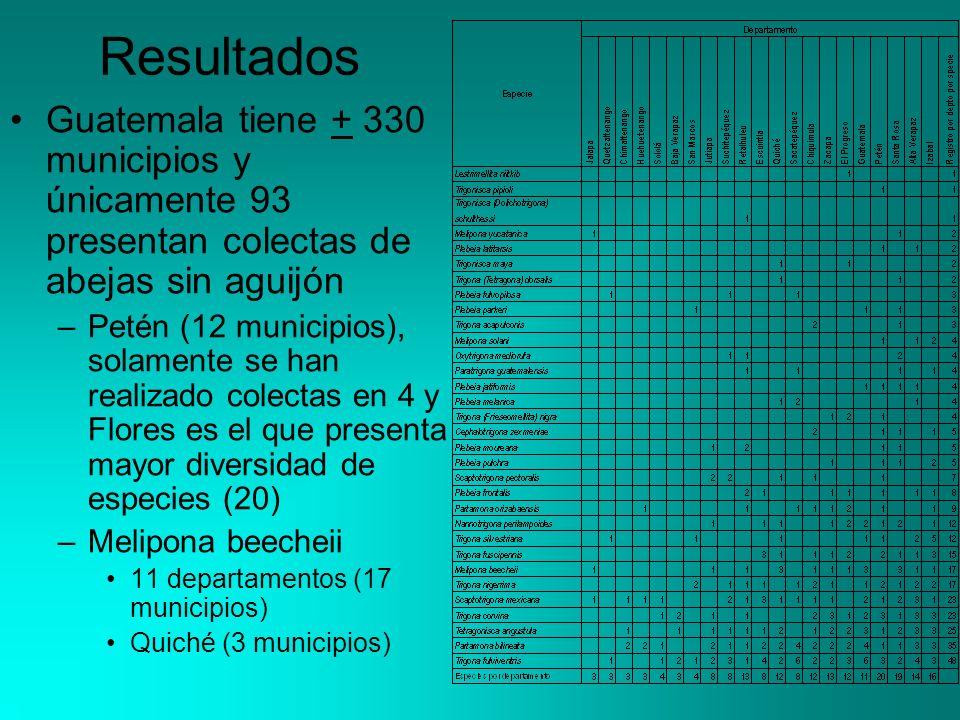 Resultados Guatemala tiene + 330 municipios y únicamente 93 presentan colectas de abejas sin aguijón –Petén (12 municipios), solamente se han realizado colectas en 4 y Flores es el que presenta mayor diversidad de especies (20) –Melipona beecheii 11 departamentos (17 municipios) Quiché (3 municipios)