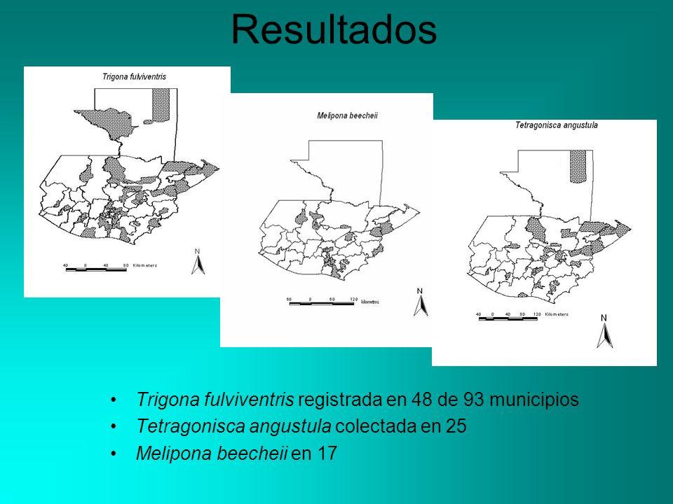 Resultados Trigona fulviventris registrada en 48 de 93 municipios Tetragonisca angustula colectada en 25 Melipona beecheii en 17