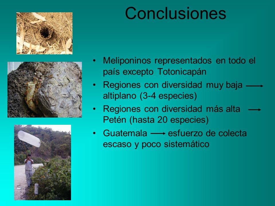 Conclusiones Meliponinos representados en todo el país excepto Totonicapán Regiones con diversidad muy baja altiplano (3-4 especies) Regiones con diversidad más alta Petén (hasta 20 especies) Guatemala esfuerzo de colecta escaso y poco sistemático