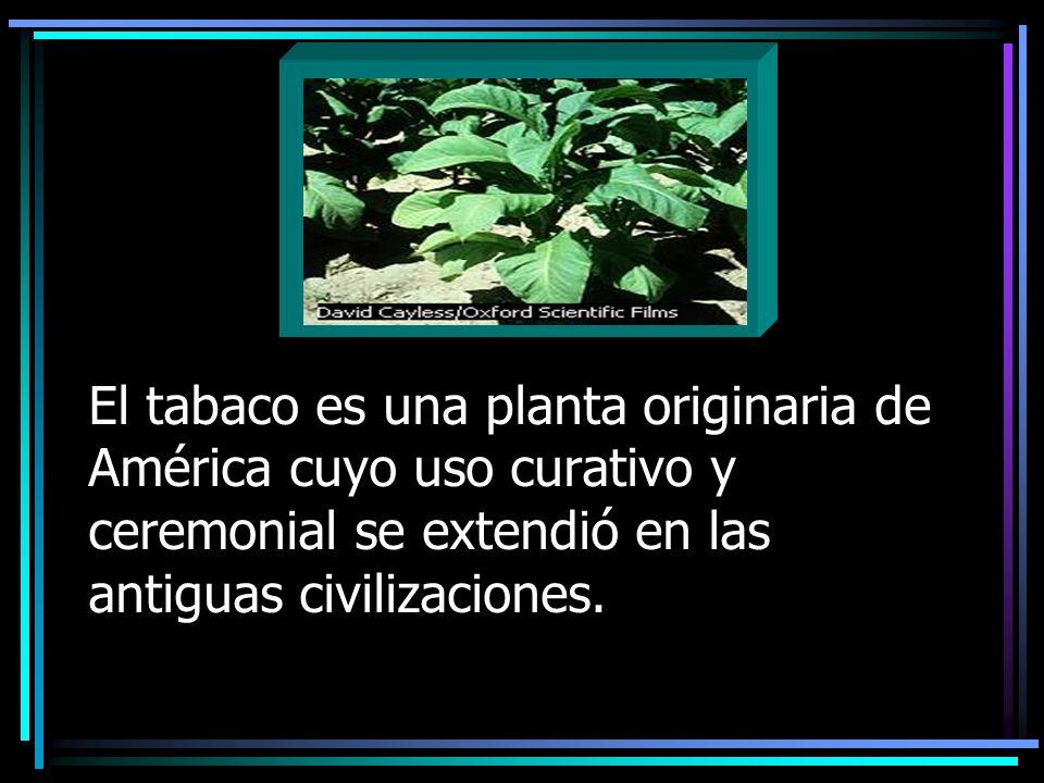 El tabaco es una planta originaria de América cuyo uso curativo y ceremonial se extendió en las antiguas civilizaciones.