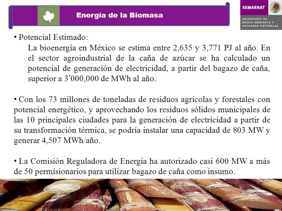Potencial Estimado: La bioenergía en México se estima entre 2,635 y 3,771 PJ al año. En el sector agroindustrial de la caña de azúcar se ha calculado